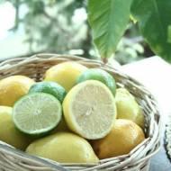 Limonkowo- cytrynowy deser lodowy