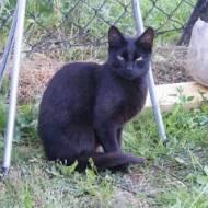 C jak Czarny kot...