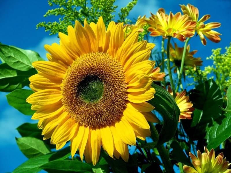 Zbawienny wpływ ogrodu na nasze samopoczucie i zdrowie.
