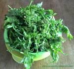 Brokuły liściaste - broccoli cima di rapa - chinskie brokuły z białą kiełbasą