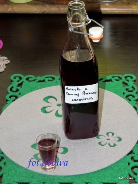 Nalewka - likier z czarnej porzeczki
