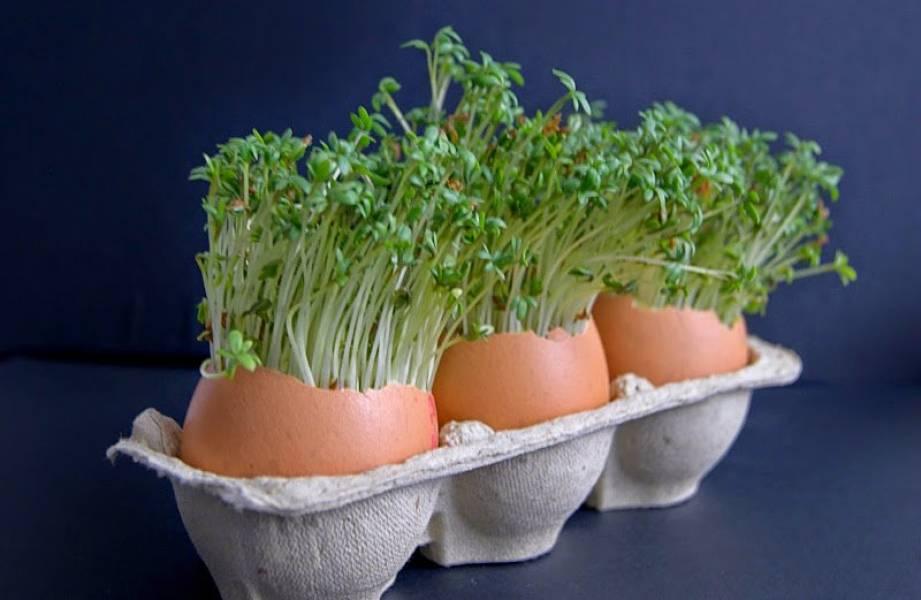 Weekendowe śniadanie - świąteczne jaja