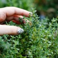 Domowe kostki ziołowe – świeże zioła przez cały rok