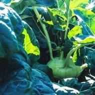 Dni Otwarte Bejo Zaden – warzywne menu: zdrowo i smacznie