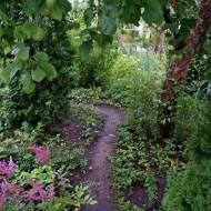 Suwałki - lato w ogrodzie Babci