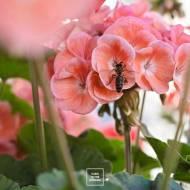 Podsumowanie roku na balkonie – Karo In The Garden