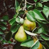 5 pysznych pomysłów na gruszki