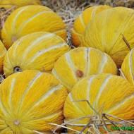 Spożywanie melonów zmniejsza ryzyko wystąpienia udaru i zawału serca.