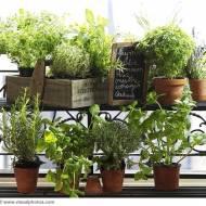 Ogródek ziołowy- inspiracje