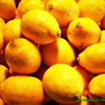 Likier cytrynowy.