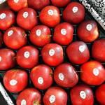 Zdrowie z polskiego sadu - Grójeckie jabłka