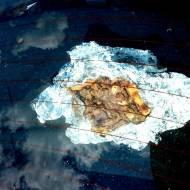 Tarta z boczniaków podgrzana w samochodzie