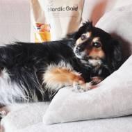 Uniq Nordic Gold - Zadbaj o zdrowie swojego psiaka!