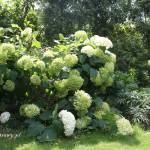 W moim ogrodzie