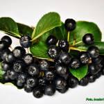 Zdrowy dżem z owoców aronii.