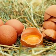 Jakie jajka wybrać?
