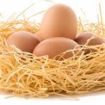 Co siedzi w jajku?