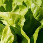 Jak zachować świeżość sałaty