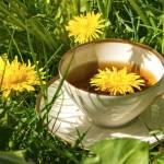 Korzeń mniszka lekarskiego, kwiaty i liście – właściwości lecznicze mniszka i stosowanie