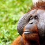 Nie jem produktów z olejem palmowym