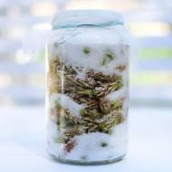 Syrop z pędów sosny - przepis na zdrowie