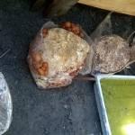 Tagliatelle z nameko i pesto z liści rzodkiewki