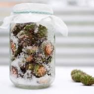 Syrop z zielonych szyszek sosny - przepis na zdrowie