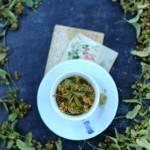 Zbieramy i suszymy zioła, herbata lipowa