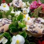 Orkiszowo- żytnie babeczki z owocami