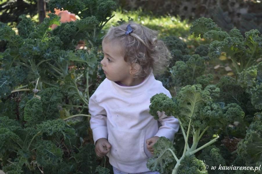 Alergia pokarmowa co jeść – 100 przepisów – rodzinny survival