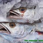 Jak przechowywać surowe ryby, aby zachowały dłużej świeżość.