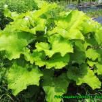 Nalewka ziołowa ( regenerująco-oczyszczająca ).