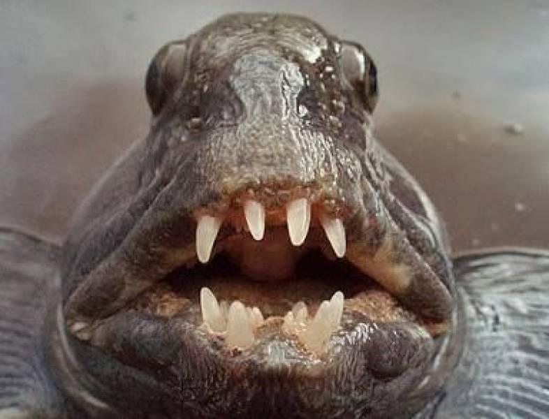 Zębacz panierowany – nowa ryba na naszych stołach