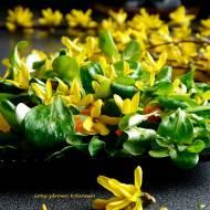 Roszponka z kwiatami forsycji - sałatka obiadowa