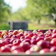 Dieta jabłkowa – 7 kilogramów w 7 dni! Wypróbuj koniecznie!