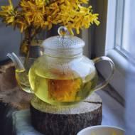 Z ŁĄKI NA TALERZ: Herbatka z forsycji