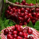 Polskie owoce sezonowe – kiedy i jakie