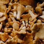 Marynowane, duszone, suszone czy smażone – jak przyrządzać grzyby?