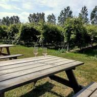 VINGARDEN – winnica , której atrakcją jest świnka uwielbiająca coca colę