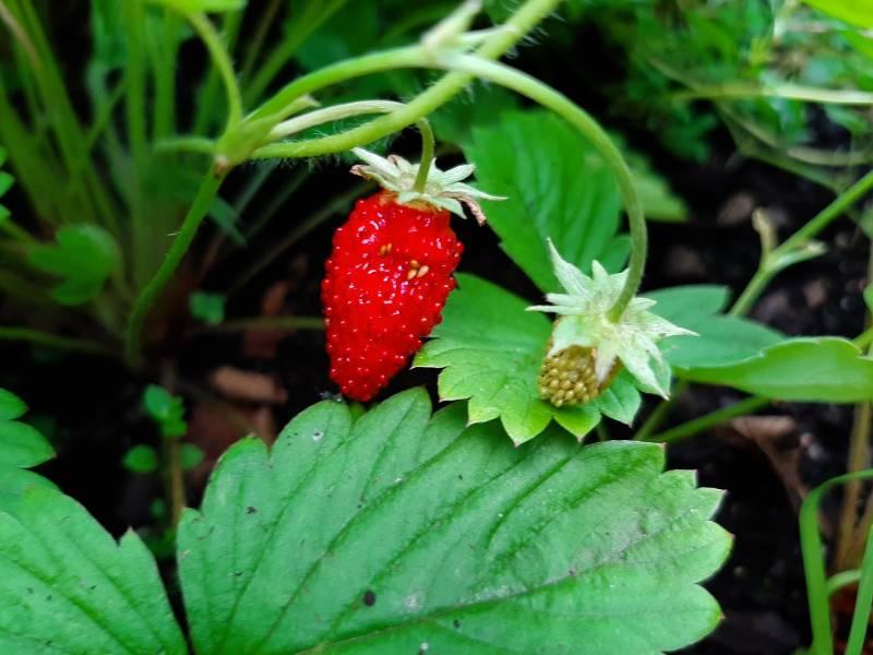 Owoce deserowe dostępne cały sezon