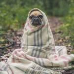 7 suplementów do walki z przeziębieniem