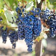 W jakich krajach powstają najlepsze wina czerwone?