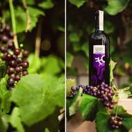 Historyczna kraina Dao – czerwone wina z północnej  Portugalii