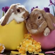 Spokojnej Wielkanocy!