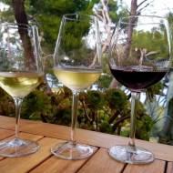 Katamaranem po winnicach Dalmacji