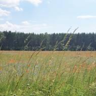 Bory Tucholskie - pomysł na weekend