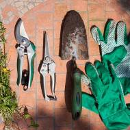 Sprawdzone sposoby pielęgnacji ogrodu w sierpniu