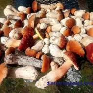 To musisz wiedzieć - 7 zasad mrożenia grzybów