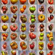 43 odmiany pomidorów które uprawiałam w tym roku – cz. I
