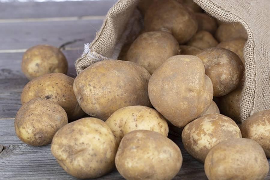 Ziemniaki – cenne rady
